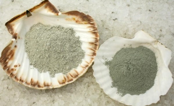 Раковины моллюска