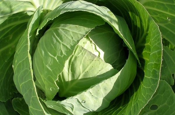 Рецепты масок из капусты