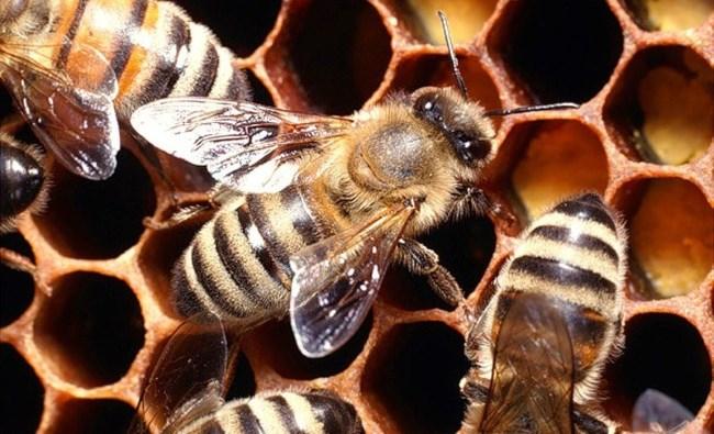 Четыре пчелы