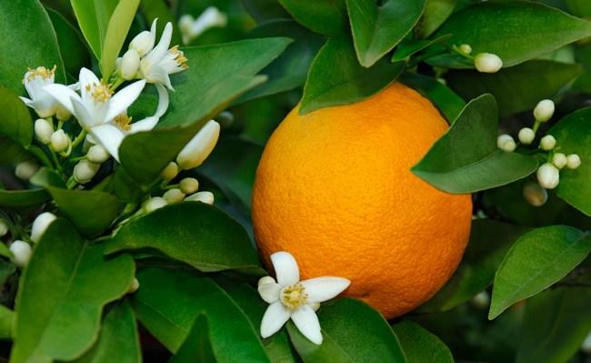 Оранжевое пятно в зелени