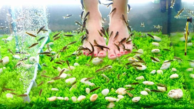 Ноги в аквариуме
